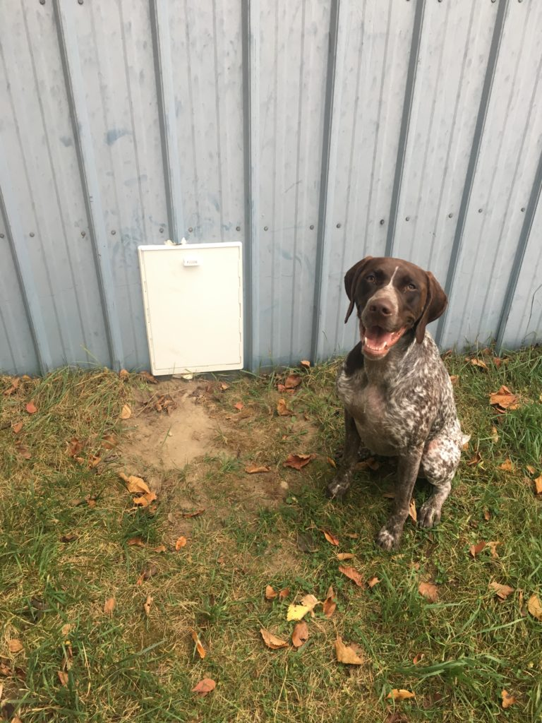 Diy Indoor Outdoor Dog Kennel A Girl And A Kiwi